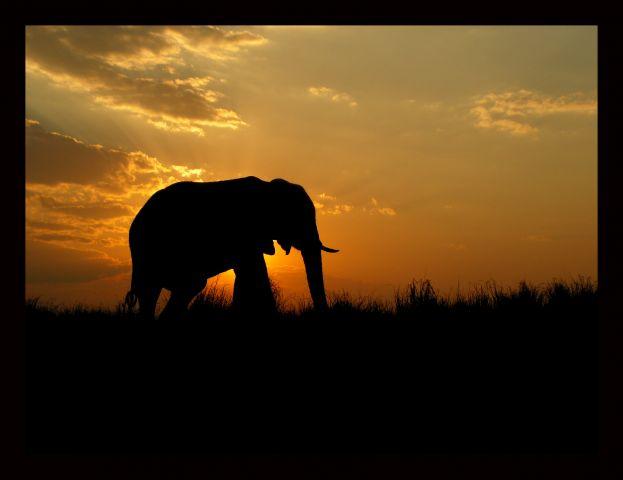 20081113002714 Elefante Atardecer En Africa